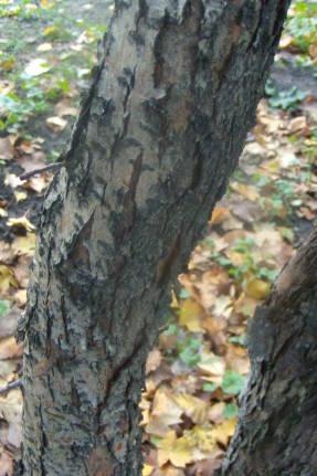 Сітки на плодові дерева - Фермер 197c377a3653a