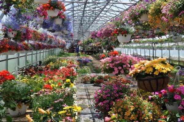 Вирощування квітів в теплиці і парнику  як можна створити сприятливі умови  для рослин  f3c157b56e953